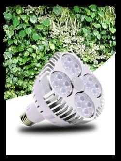led greenvisualed horticole culture