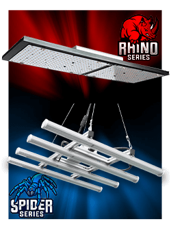 led cannaled spider rhino horticole culture