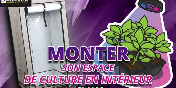 Montage d'une chambre de culture HomeBox Q60+ pour une culture indoor